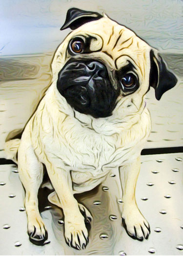 Custom Digital Pug Portrait