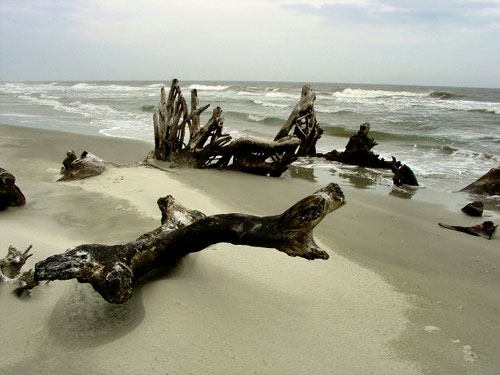Driftwood Landscape Fine Art Photo